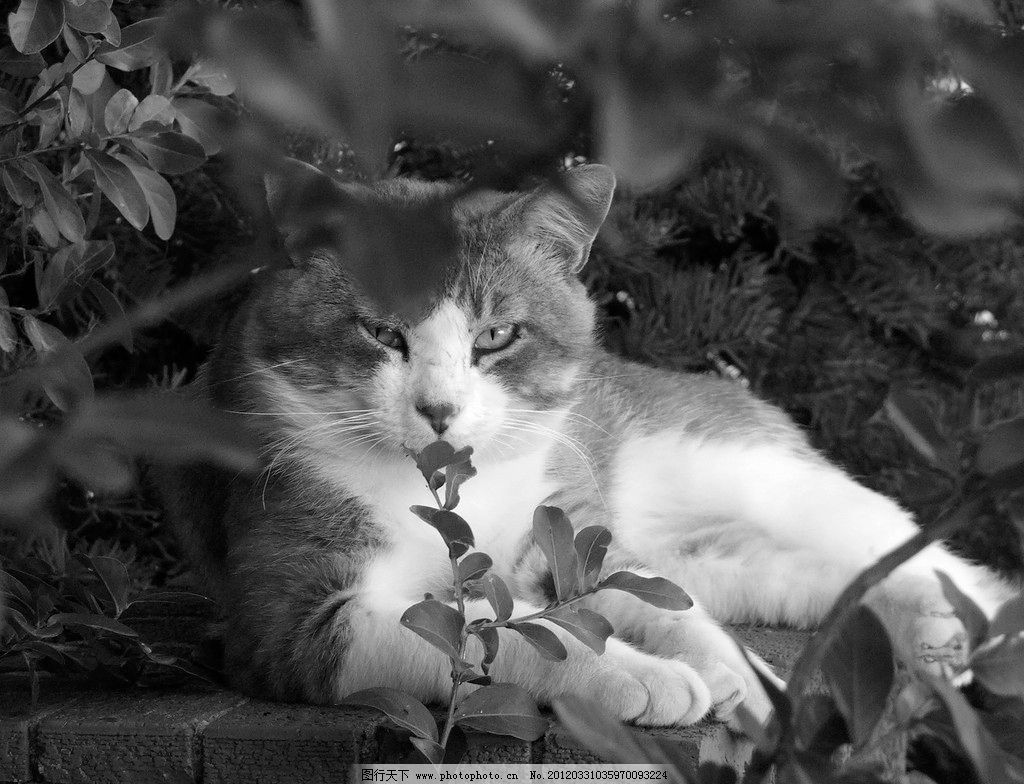 可爱小猫 可爱 小猫 猫咪